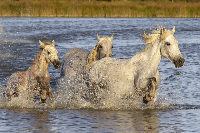 camargue-chevaux-camping-saint-remy-provence